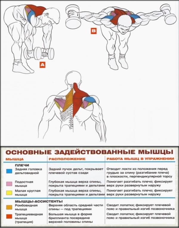 Упражнения для ширины плеч в домашних условиях