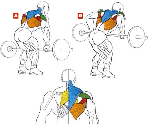 Упражнения для прокачки спины в домашних условиях